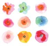 Insieme dei fiori variopinti Bei elementi floreali Immagini Stock Libere da Diritti