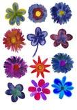 Insieme dei fiori verniciati in acquerello Fotografia Stock Libera da Diritti