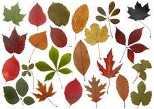 Insieme dei fogli di autunno Fotografia Stock Libera da Diritti