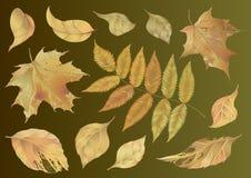 Insieme dei fogli di autunno Fotografia Stock