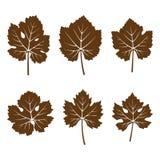 Insieme dei fogli di autunno Immagine Stock