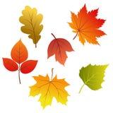 Insieme dei fogli di autunno di vettore Fotografia Stock