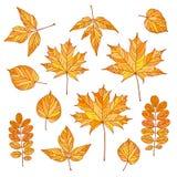 Insieme dei fogli di autunno di vettore Fotografie Stock Libere da Diritti