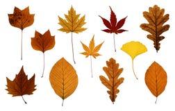 Insieme dei fogli di autunno isolati su bianco Fotografia Stock Libera da Diritti