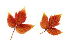 Insieme dei fogli di autunno variopinti Fotografia Stock Libera da Diritti