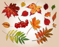 Insieme dei fogli di autunno variopinti Fotografia Stock