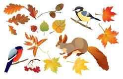 Insieme dei fogli isolati della foresta di autunno Fotografie Stock Libere da Diritti