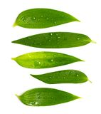 Insieme dei fogli verdi ricchi Fotografia Stock