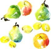 Insieme dei frutti del disegno dell'acquerello Immagine Stock