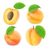 Insieme dei frutti differenti dell'albicocca isolato Fotografie Stock