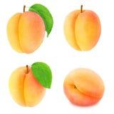 Insieme dei frutti differenti dell'albicocca isolato Fotografia Stock Libera da Diritti