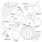Insieme dei frutti disegnati a mano Fotografia Stock Libera da Diritti