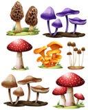 Insieme dei funghi differenti illustrazione vettoriale