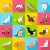 Insieme dei gatti delle razze differenti con ombra lunga Fotografia Stock
