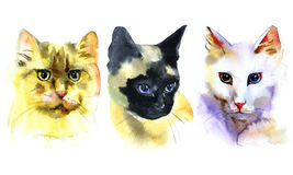 Insieme dei gatti disegnati a mano isolati acquerello Immagini Stock