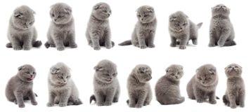 Insieme dei gattini Immagine Stock Libera da Diritti