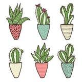 Insieme dei generi differenti di cactus Fotografie Stock
