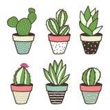 Insieme dei generi differenti di cactus Fotografia Stock Libera da Diritti