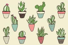 Insieme dei generi differenti di cactus Immagini Stock Libere da Diritti