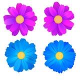 Insieme dei germogli isolati della gerbera blu e porpora dei fiori, Fiori variopinti di vettore su fondo bianco Modello per Immagine Stock Libera da Diritti