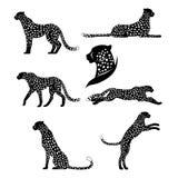 Insieme dei ghepardi grafici Immagini Stock Libere da Diritti