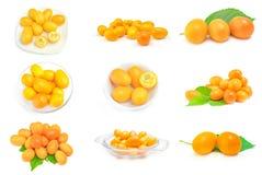 Insieme dei kumquat Immagini Stock