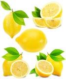 Insieme dei limoni isolati sui precedenti bianchi Fotografia Stock Libera da Diritti