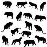 Insieme dei lupi, delle tigri, dei leopardi e dei leoni Immagini Stock