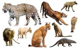 Insieme dei mammiferi selvatici isolati sopra bianco Immagini Stock