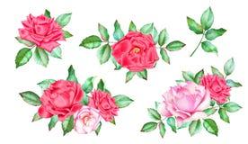Insieme dei mazzi dell'acquerello con le rose rosse e rosa Immagini Stock