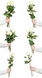 Insieme dei mazzi della rosa di bianco di fiori isolati Immagini Stock Libere da Diritti