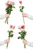 Insieme dei mazzi della rosa di rosa di fiori isolati Fotografie Stock