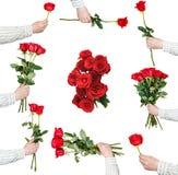 Insieme dei mazzi della rosa rossa di fiori isolati Fotografie Stock Libere da Diritti