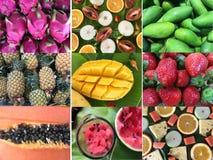 Insieme dei modelli con i frutti Accumulazione della frutta tropicale Immagine Stock Libera da Diritti