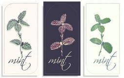 Insieme dei modelli delle cartoline, invito di vettore con i ramoscelli disegnati a mano di bella menta, delicatamente tonalit? d illustrazione vettoriale