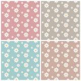 Insieme dei modelli di fiori senza cuciture della margherita bianca Immagine Stock