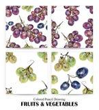 Insieme dei modelli senza cuciture con l'uva multicolore estratta a mano con la matita colorata illustrazione di stock