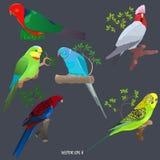 Insieme dei pappagalli brillantemente colorati sui rami ed in erba immagini stock