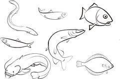 insieme dei pesci Immagini Stock Libere da Diritti