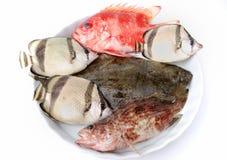 Insieme dei pesci tropicali Fotografie Stock