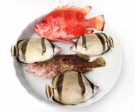 Insieme dei pesci tropicali Immagine Stock Libera da Diritti