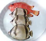 Insieme dei pesci tropicali Immagine Stock
