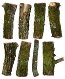 Insieme dei pezzi di rami di albero isolati su bianco Immagine Stock Libera da Diritti