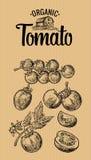 Insieme dei pomodori disegnati a mano su fondo marrone Pomodoro, metà e fetta Illustrazione d'annata dell'incisione per il logoty Fotografie Stock