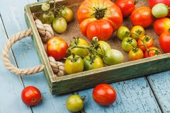 Insieme dei pomodori rossi e verdi differenti Immagini Stock Libere da Diritti