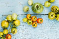 Insieme dei pomodori rossi e verdi differenti Immagine Stock Libera da Diritti