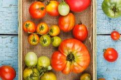 Insieme dei pomodori rossi e verdi differenti Fotografia Stock