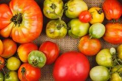 Insieme dei pomodori rossi e verdi differenti Fotografie Stock
