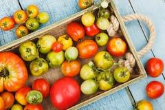 Insieme dei pomodori rossi e verdi differenti Fotografia Stock Libera da Diritti