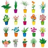 Insieme dei POT variopinti dei fiori Fotografia Stock Libera da Diritti